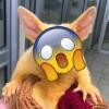 """FOTOS: Encuentran a un """"Pikachu"""" de la vida real"""